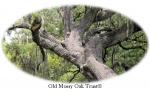 Old Mossy Oak Trust