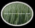 Tritium International Consultants, PMA